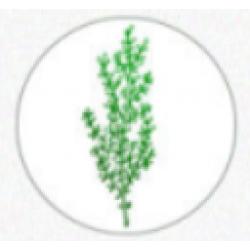 Metal wax seal - leaves